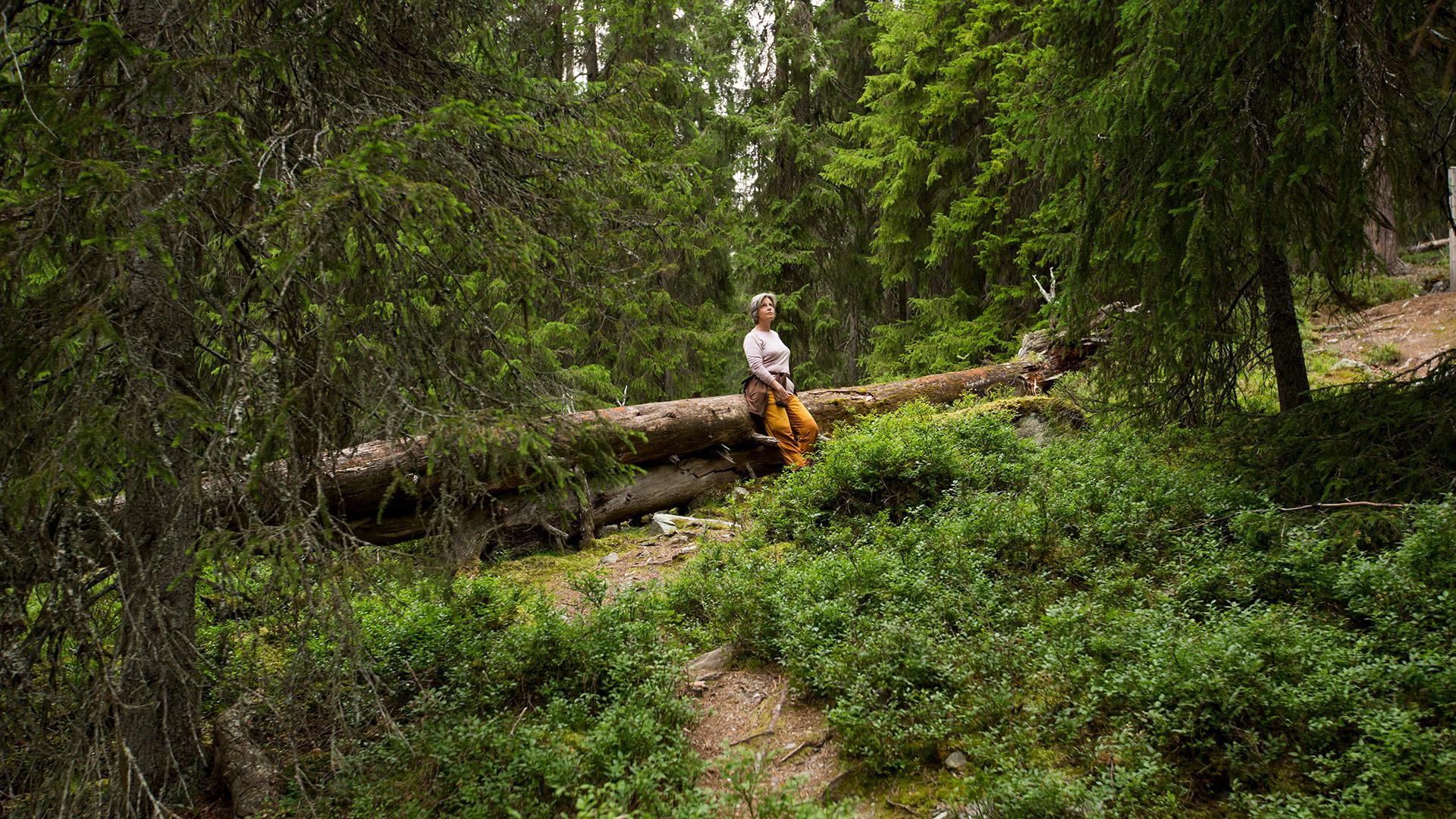 Person på tur i gammelskog.